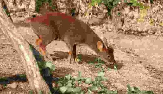 世界最小の鹿「プーズー」に会うため、埼玉県こども動物自然公園へ行ってきた